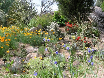 Dryland Mesa in bloom