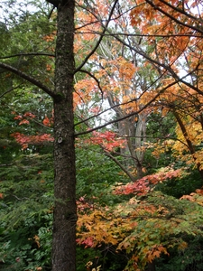 Les feuilles d'automne