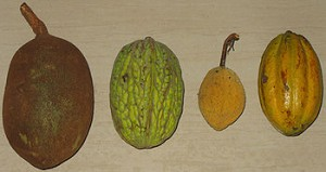 various cacao pods
