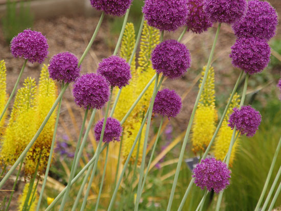 Fall bulb pre order sale denver botanic gardens with the fall bulb pre order sale it makes bulb designing easier since your spring garden is currently blooming when you order and eliminates searching mightylinksfo