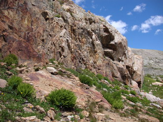 Alpine Lady Fern on Pawnee Pass, Boulder County, Colorado