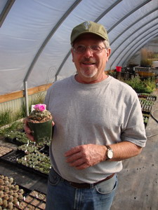 Bill Adams in his greenhouse with Ariocarpus fissuratus in bloom