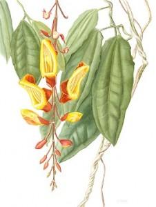 Botanical Illustration at Denver Botanic Gardens