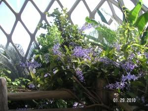 Conservatory.3