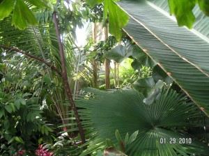 Conservatory.4