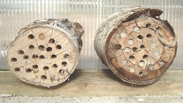 Logs designed as beneficial insect hotel