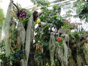 Orchids in tropical exhibit