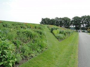 Swaths of perennials in the grass berm