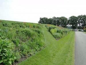 Swaths of perennials in the grass berm
