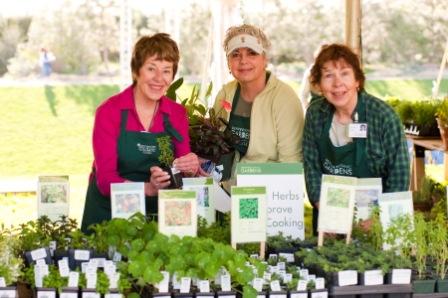 Three member of Denver Botanic Gardens Guild are volunteering at the Herb Garden tent.  These volunteers have a wide selection of herb seedlings on a table in front of them.  These Guild members are taking a break from answering questions to pose for a picture.  Photo copyright Scott Dressel-Martin