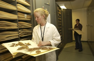 The new colleciton will be housed with the existing two herbaria, in its own case