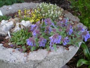 How To Make A Simple Hypertufa Trough Denver Botanic Gardens