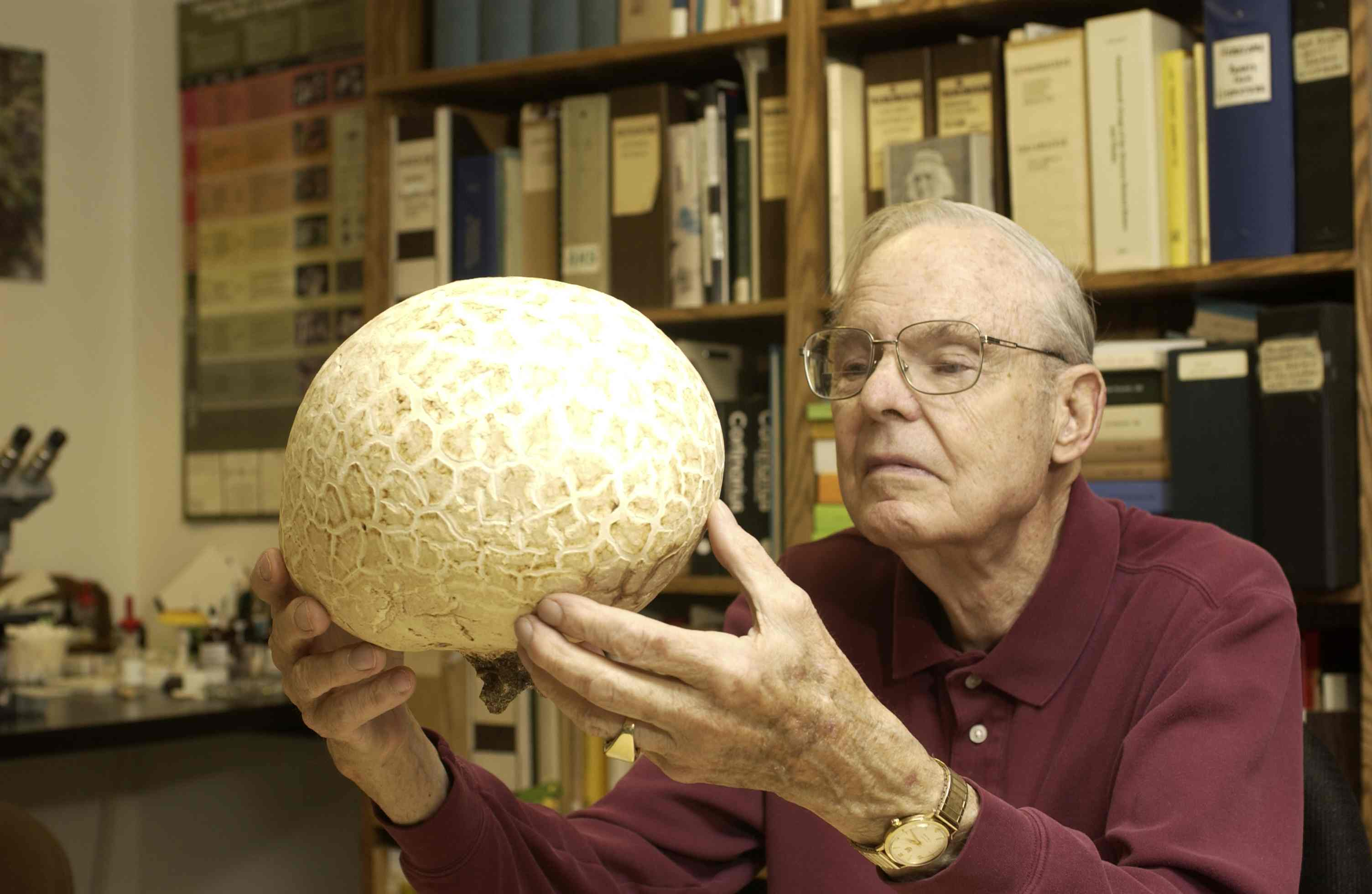 A puffball species being held by Bob Brace, a former herbarium volunteer