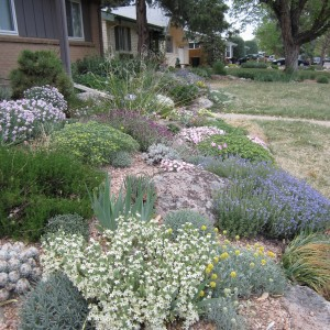 Garden Design With Rock Gardening In The Rockies Denver Botanic Gardens  With Transplanting Roses From Botanicgardens