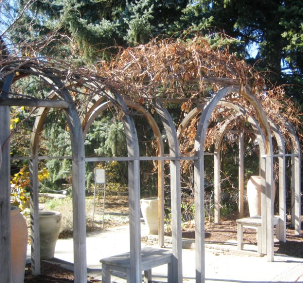 The cathedral-like arbor at the entrance to the Scripture Garden.