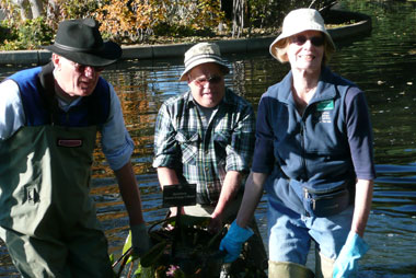 Seasoned CWGS volunteers Bob Hoffman, Ken Koons and Carla Littlefield tackling the heavy work, removing hardy waterlilies from the Monet Pool.