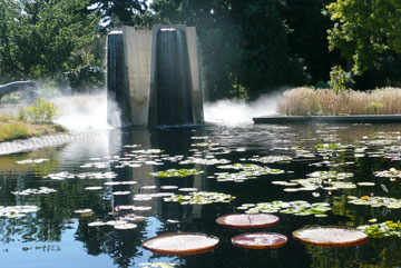 Victoria waterlilies in the Four Towers Fountain pool.