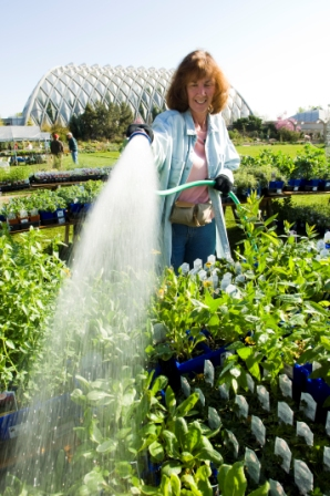A Spring Plant Sale Volunteer waters rows of plants in the morning with Boettcher Memorial Tropical Conservatory in the background