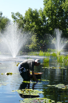 Cherished Denver Botanic Gardens volunteers were super all summer.