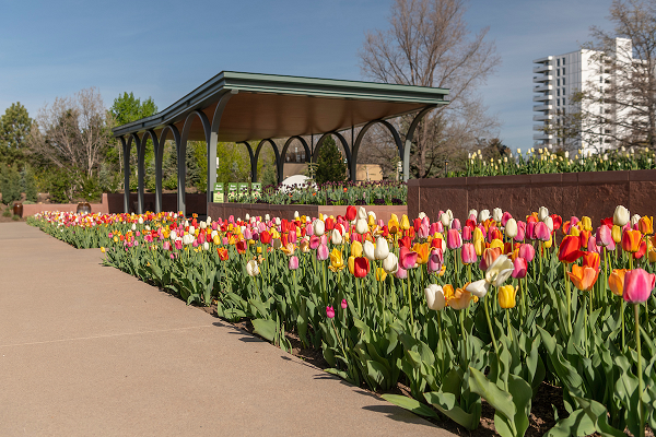Annuals Garden and Pavilion in the spring