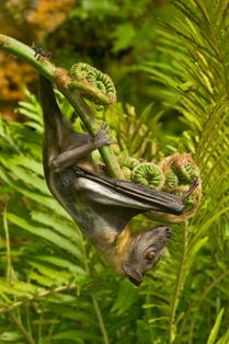 Bat and Fern