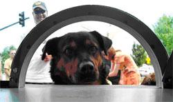 Dog at Gatehouse Window