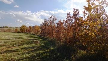 Chatfield Oaks