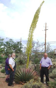 Utah agave at Agua Fria