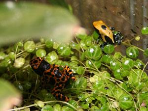 frogs_1.jpg