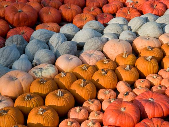 Kids will get to find various colors of pumpkins and their relatives.