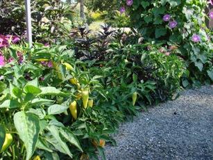 Vegetable Abundance for Labor Day