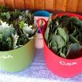 buckets of greens