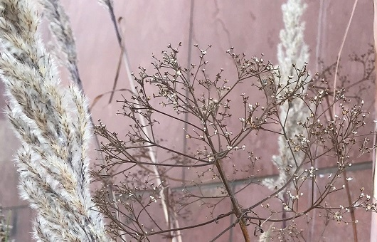 Pampas grass and Joe Pye weed mingle in container