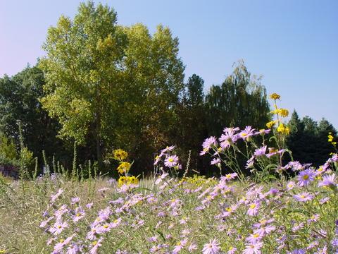 The Plains Garden