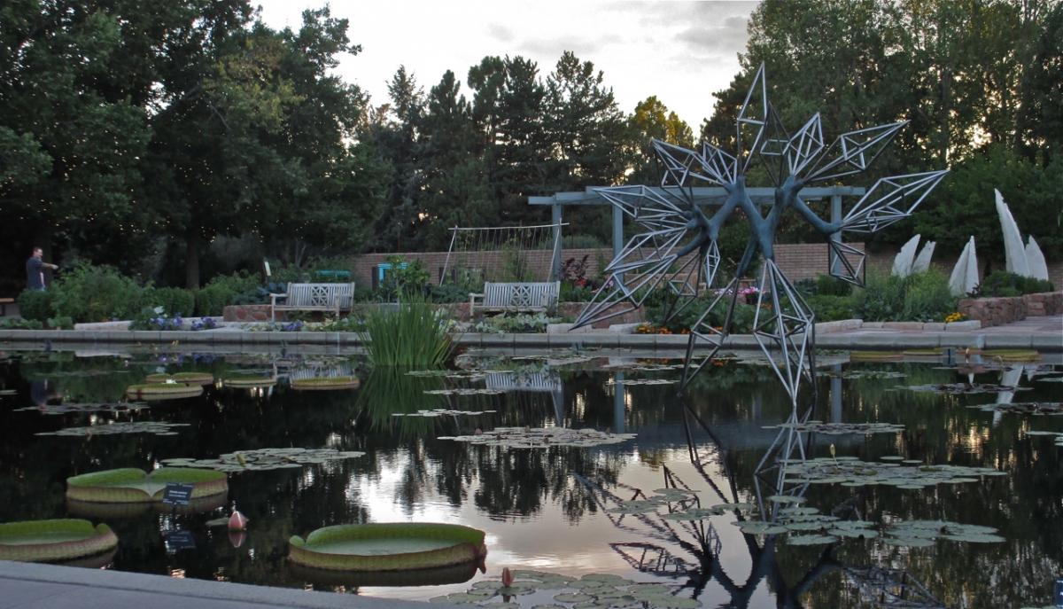Victoria plant in Monet Pool