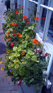 window box bright pallette