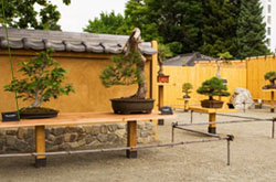 Bonsai Pavilion