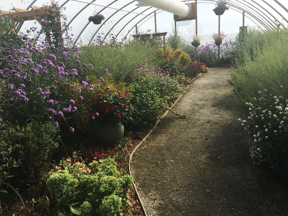 Butterflies At Chatfield Denver Botanic Gardens