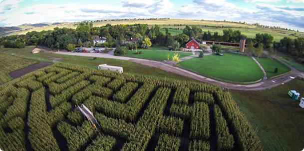 Corn Maze Open At Chatfield Gardens