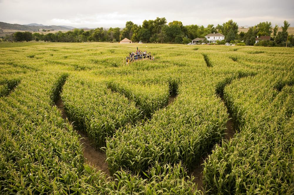 Corn Maze Denver Botanic Gardens
