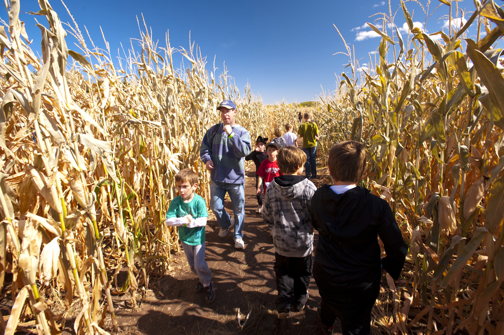 corn maze private events denver botanic gardens