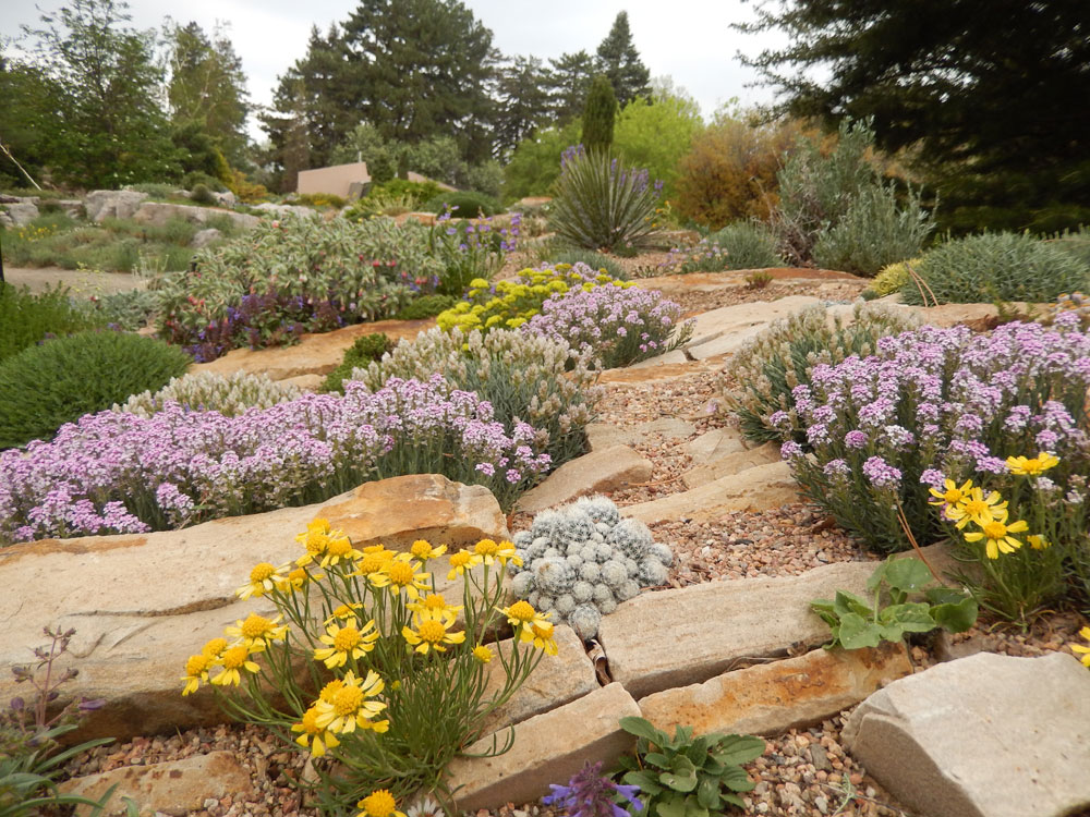 Crevice Garden In The Rock Alpine Garden With Facultative Alpines And  Chasmophytes