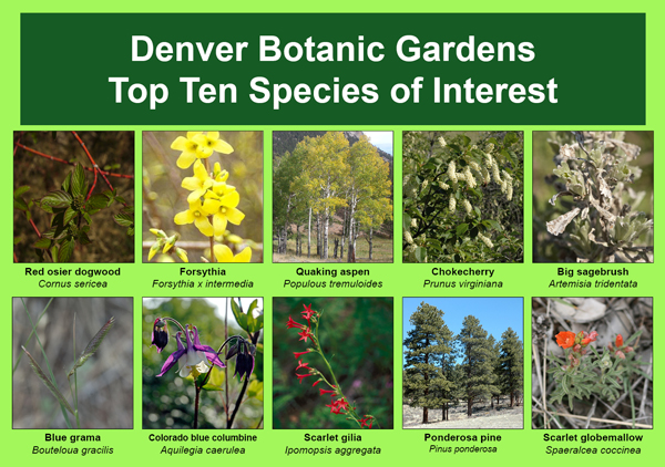 Denver Botanic Gardens Top Ten Species of Interest