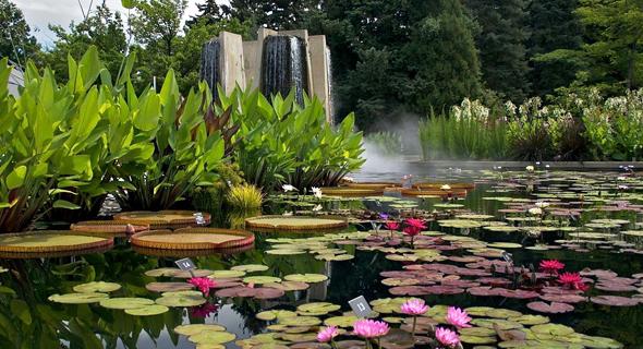 Water Gardens | Denver Botanic Gardens