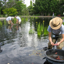 Interns working in the Water Gardens