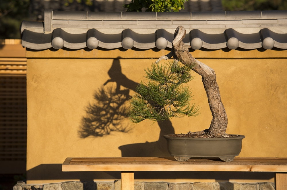 50th Anniversary Of The Rocky Mountain Bonsai Society Show Denver Botanic Gardens