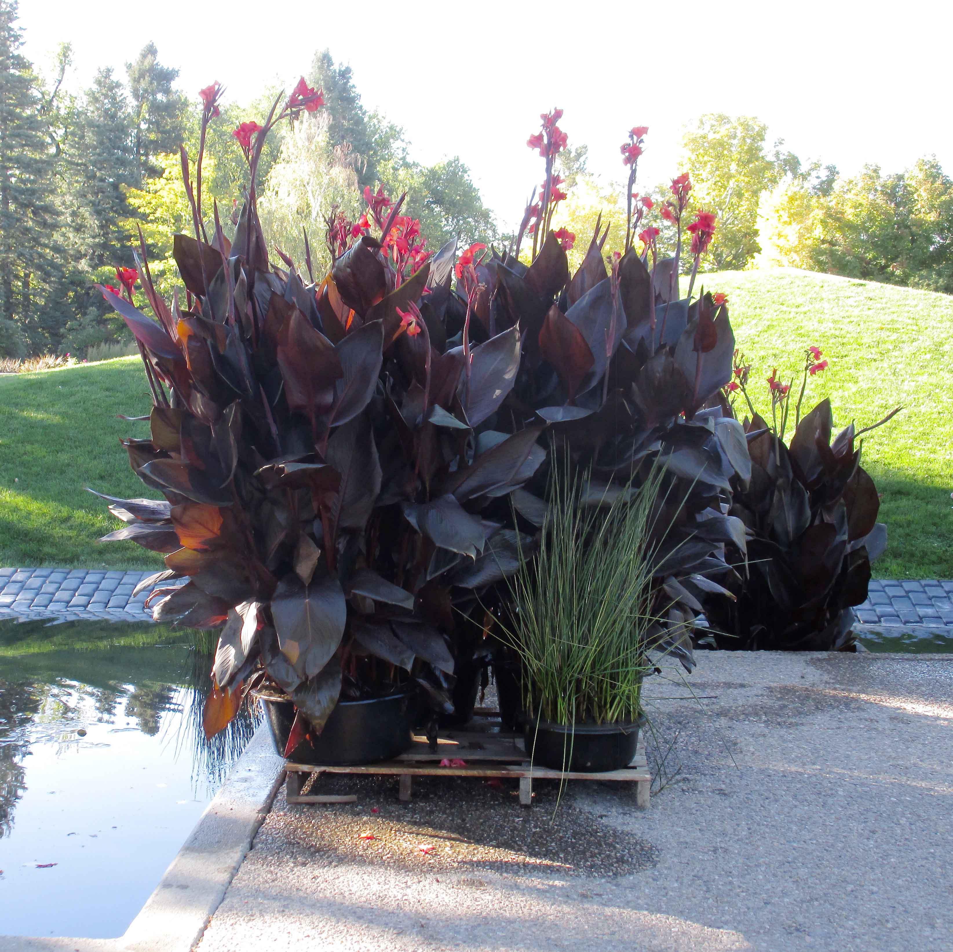 Autumn in the Water Gardens